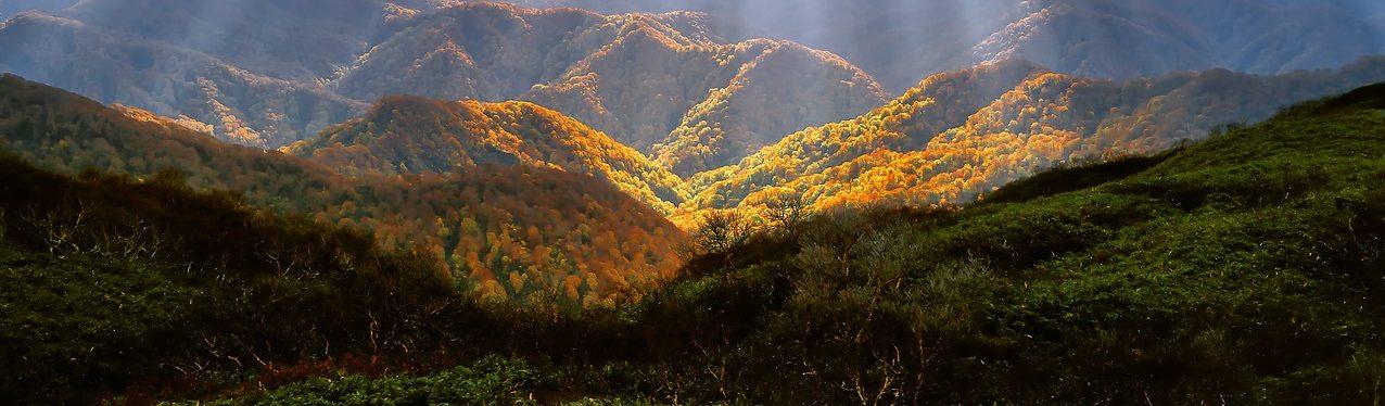 SCPI forestières : comment y accéder pour en devenir rentier ?