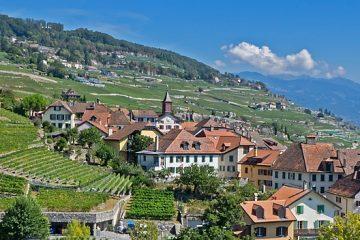 devenir rentier en investissant dans les Groupements fonciers viticoles image
