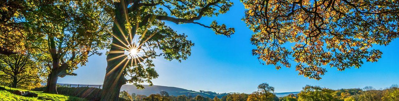 Quelques conseils pour devenir rentier en investissant dans les groupements fonciers agricoles